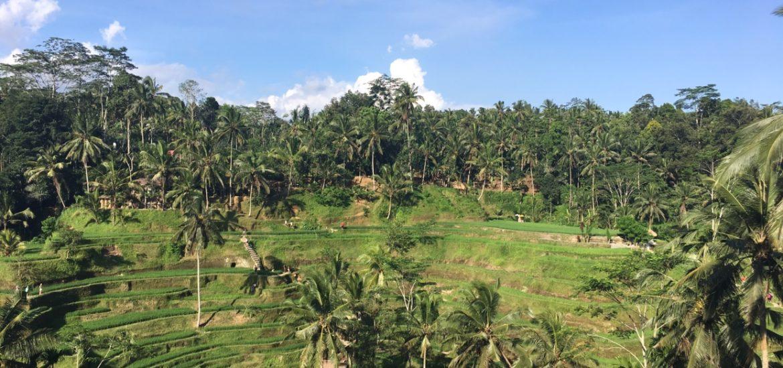A ilha mais internacional da Indonésia merece a sua atenção na hora de montar um roteiro de viagem. Confira os lugares que você TEM que em Bali